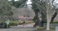 公園のちょうちん.JPG