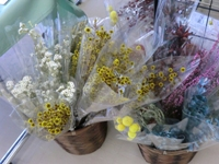 採用:花の写真.jpg