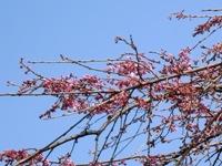 桜も咲きそう.JPG