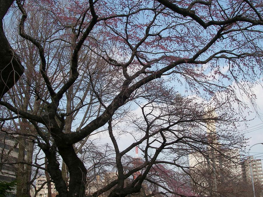 桜(並木1).jpg