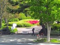榴岡公園.jpg