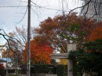 管区気象台の紅葉.jpg