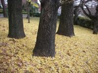 黄色のじゅうたん.jpg