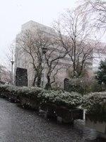 13.04.21 桜と雪2.jpg