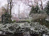 13.04.21 桜と雪3.jpg