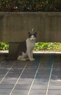 17.07.22 猫①.jpg