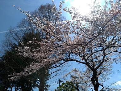 20.04.12 桜③.jpg